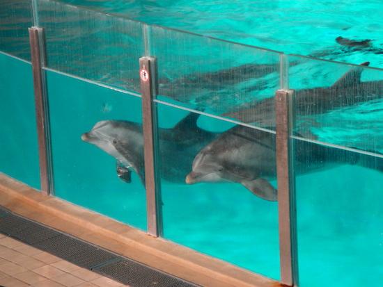 finland_dolphin3