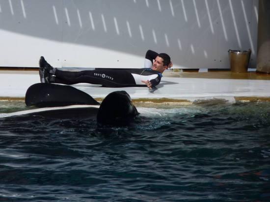Orca en Antibes