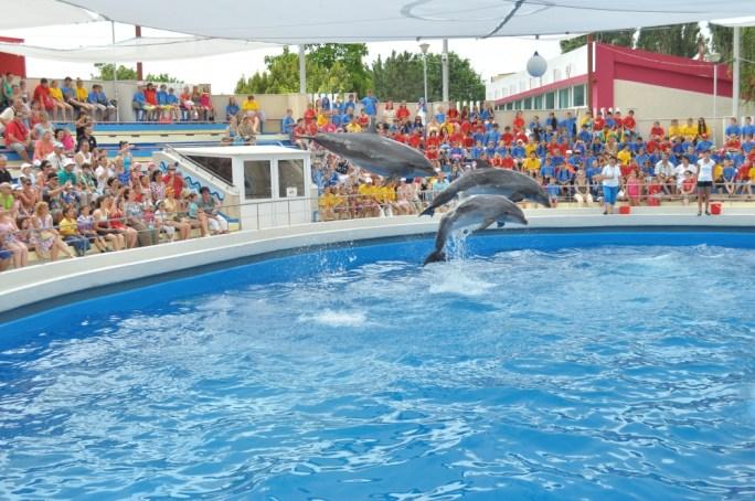 roumanie-taiji-dauphins