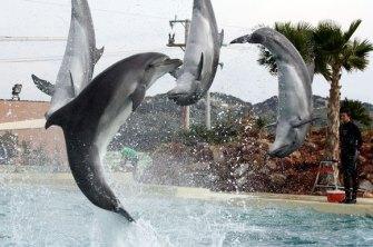 grece-dauphins-captifs
