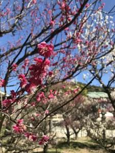 梅の木の写真