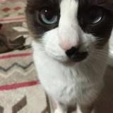 こっちを見ている可愛いネコの写真