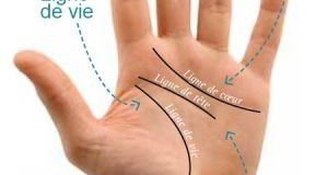 Lire les lignes de la main