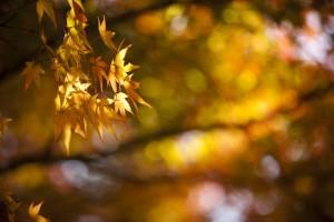 福岡 風景写真 紅葉の写真 ブルームスベリーフォトプロダクション Tatsuya Fukuda 0358