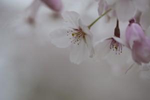 福岡 ロケ撮 出張撮影 フォトスタジオ 写真教室 フォトスクール 結婚式の写真 0358