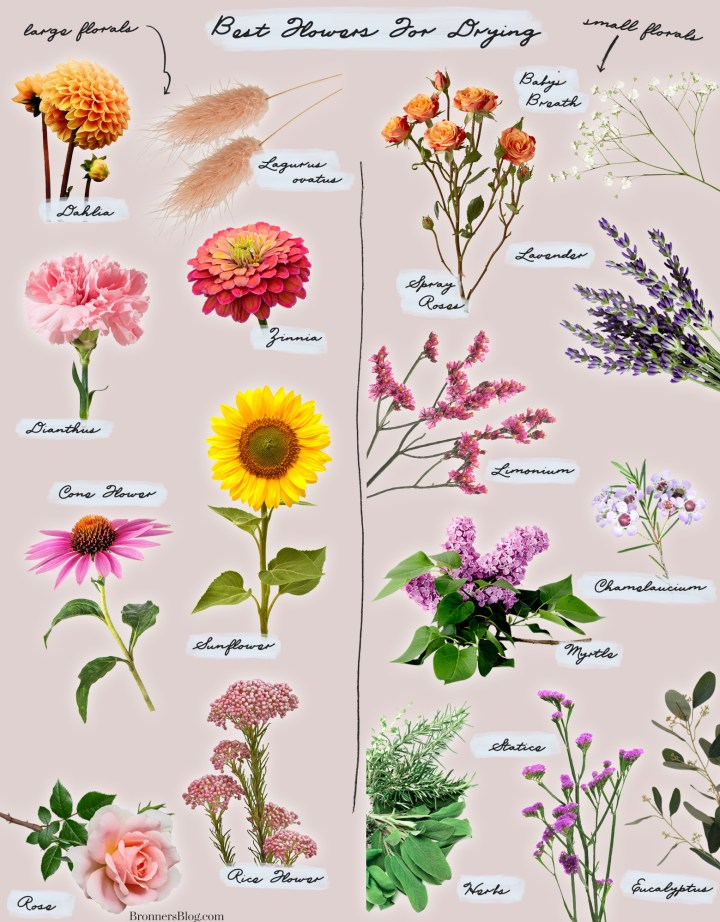 Best Flowers For Drying