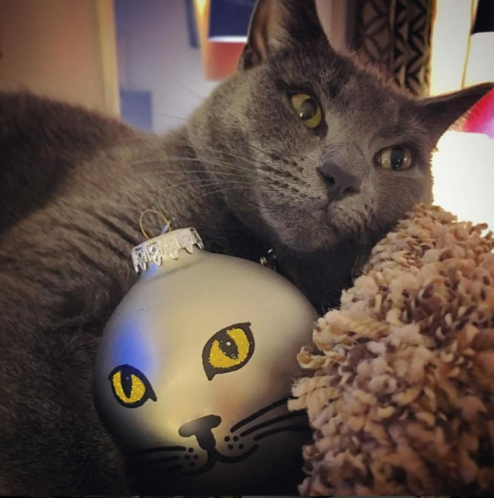 Grey cat cuddling Personalized grey cat face ornament.