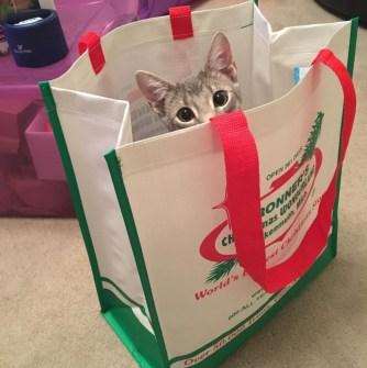 Pet cat in Bronner's reusable bag.