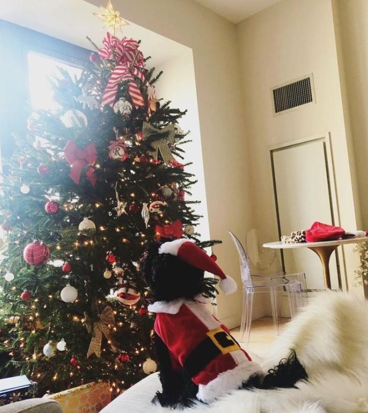 Dog in Santa Suit staring at Christmas Tree