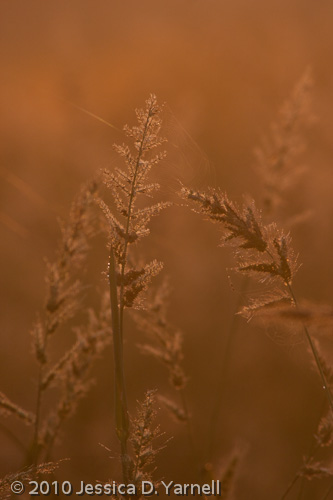 Sunrise grasses