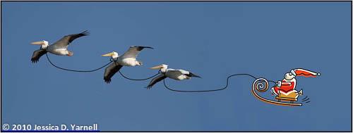 Santa Claus and his Pelicans
