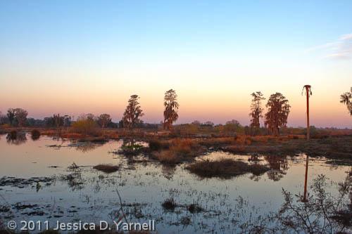Heron Hideout trail at sunrise