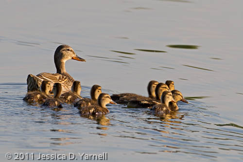 Mother and brood