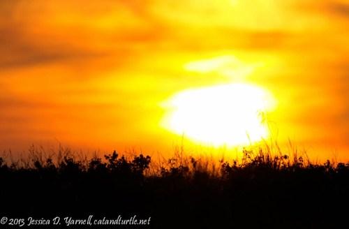 Grassy Sunset