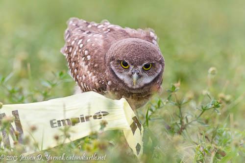 Caution!  Cuteness alert!