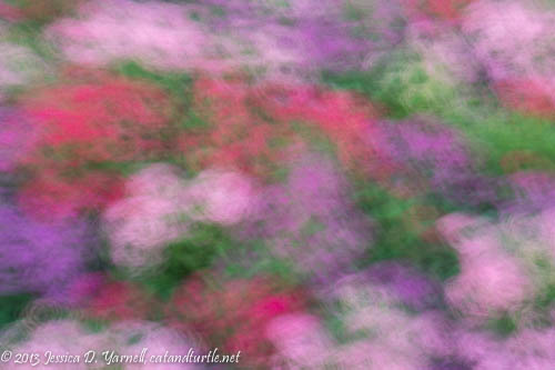 Pentas Blur