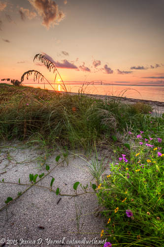 Sunrise at Fort De Soto - Beach Grasses