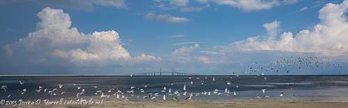 Flocks of Birds at East Beach