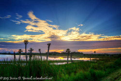 Viera Wetlands Sunrise