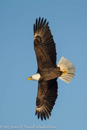 Bald Eagle Banking
