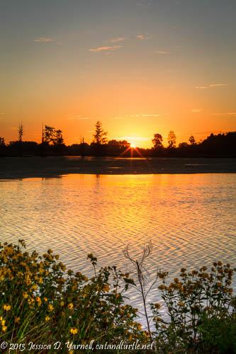 Burr Marigold Sunrise
