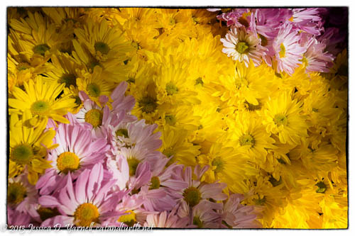 Purple and Yellow Mums