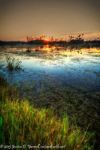 Sunrise at Orlando Wetlands