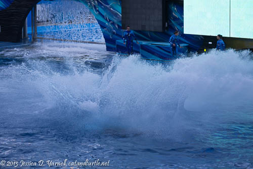 Shamu Splash_Sea World Orlando_201312069_copyrightJessYarnell