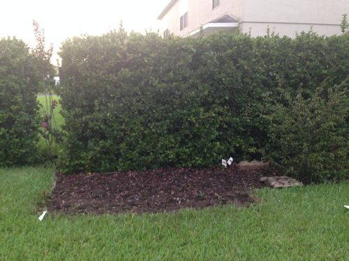 The Brown Thrasher Dirt Pile!
