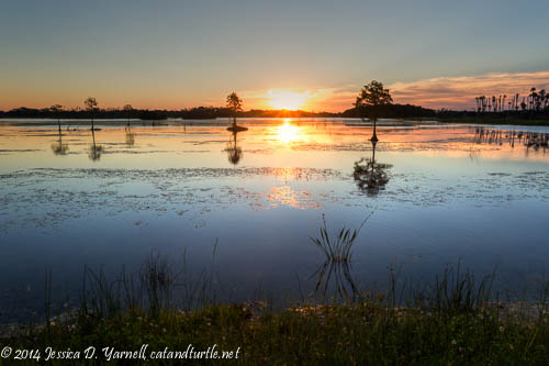 Sunrise at Orlando Wetlands Park