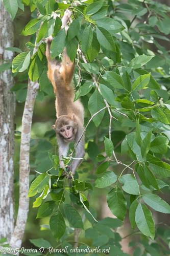 Just Hanging Around!