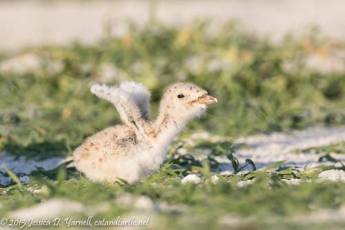 Fuzzy Wings