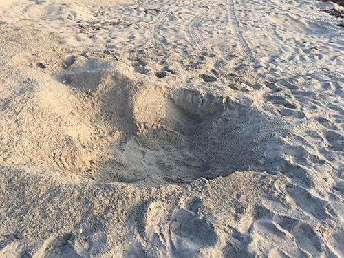 Sea Turtle nest hole in the dunes (photo courtesy of Rich)