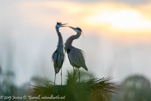 Christmas Eve Sunrise at Viera Wetlands