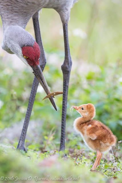 Comparing Beaks