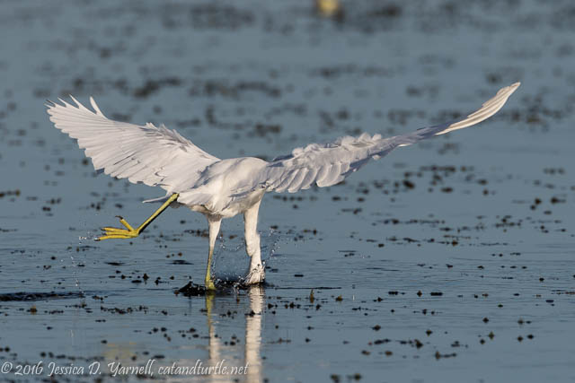 Birdy Arabesque? at Orlando Wetlands