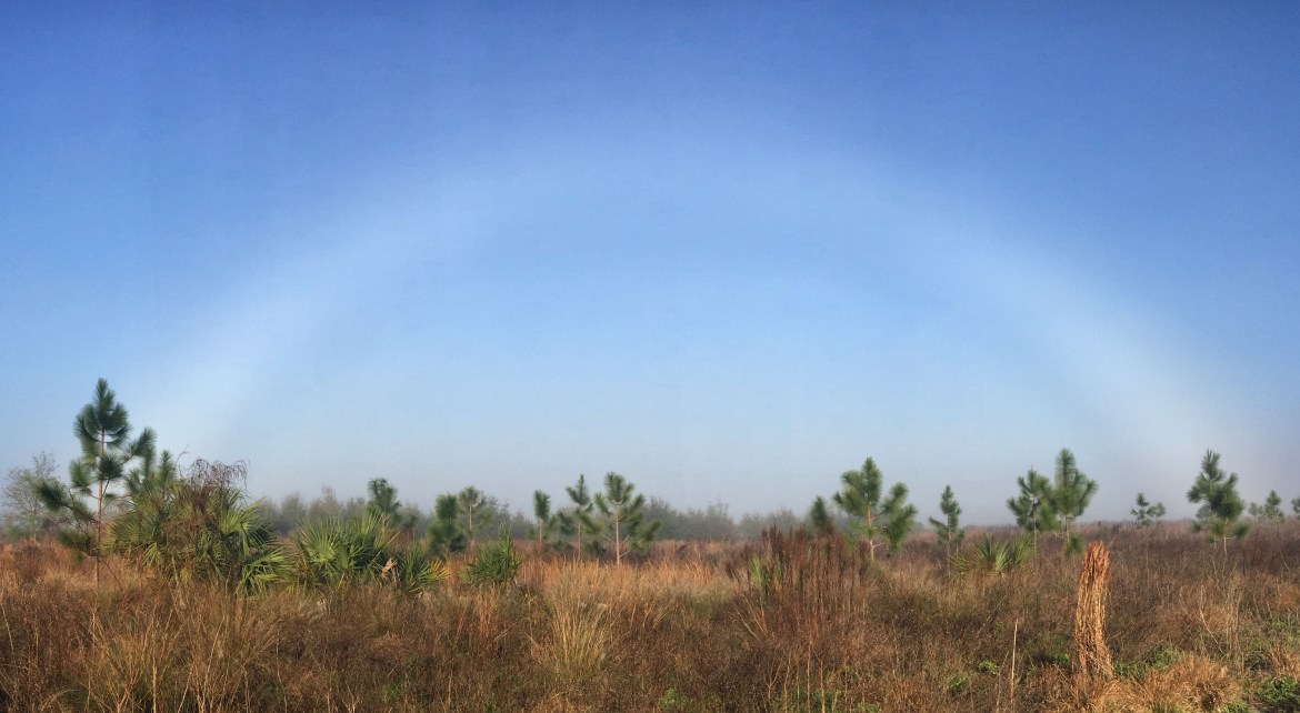 Fogbow at PEAR Park
