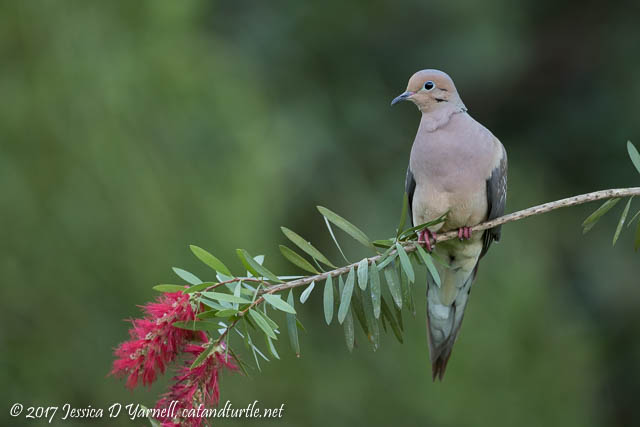 Mourning Doves on Feeder