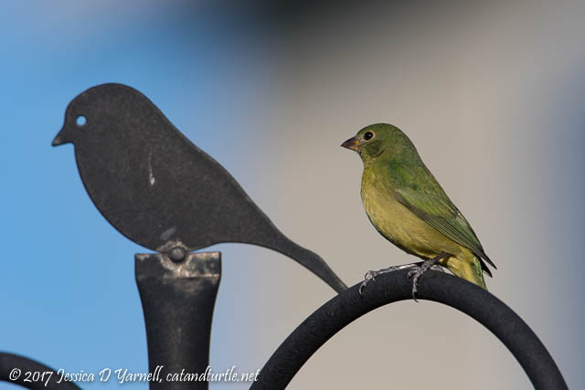 Greenie Painted Bunting Next to Finial