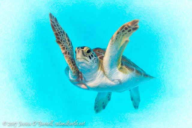 Green Sea Turtle at Loggerhead Marinelife Center - World Turtle Day 2017