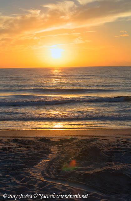 Turtle Tracks at Sunrise