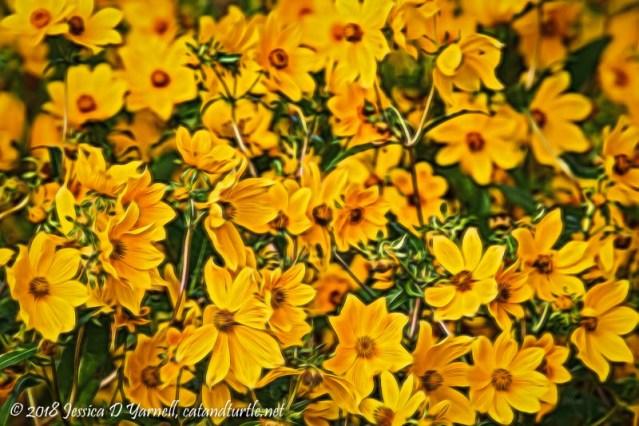 Burr Marigolds (enhanced in Topaz Glow)
