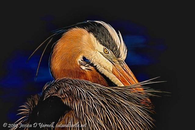 Great Blue Heron Preening (enhanced with Topaz Glow)