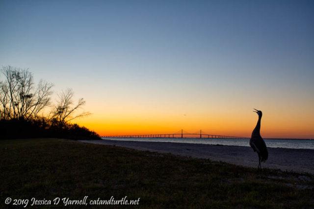 Welcoming the Sunrise