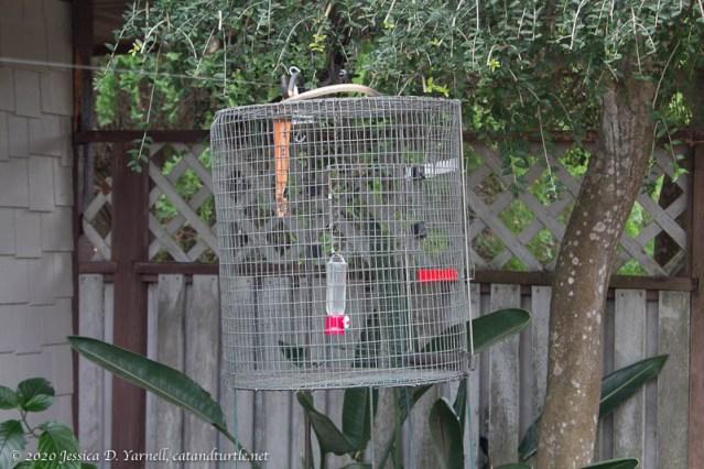 Hummingbird Banding Cage