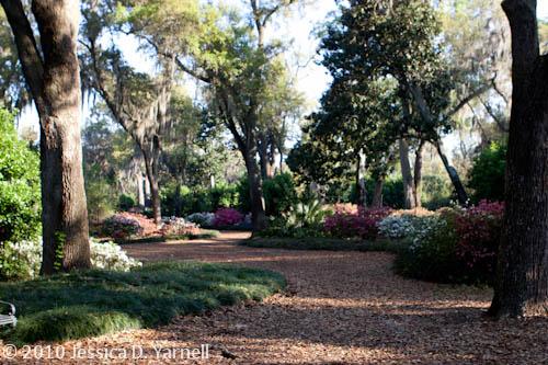 Azalea paths