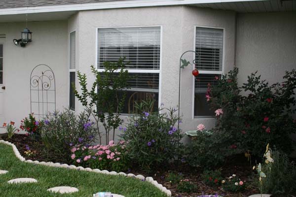 Mandevilla and Rambo daylilies added to bed