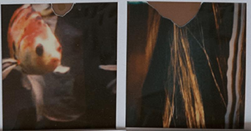 Polaroid Kameras Probleme Lösungen