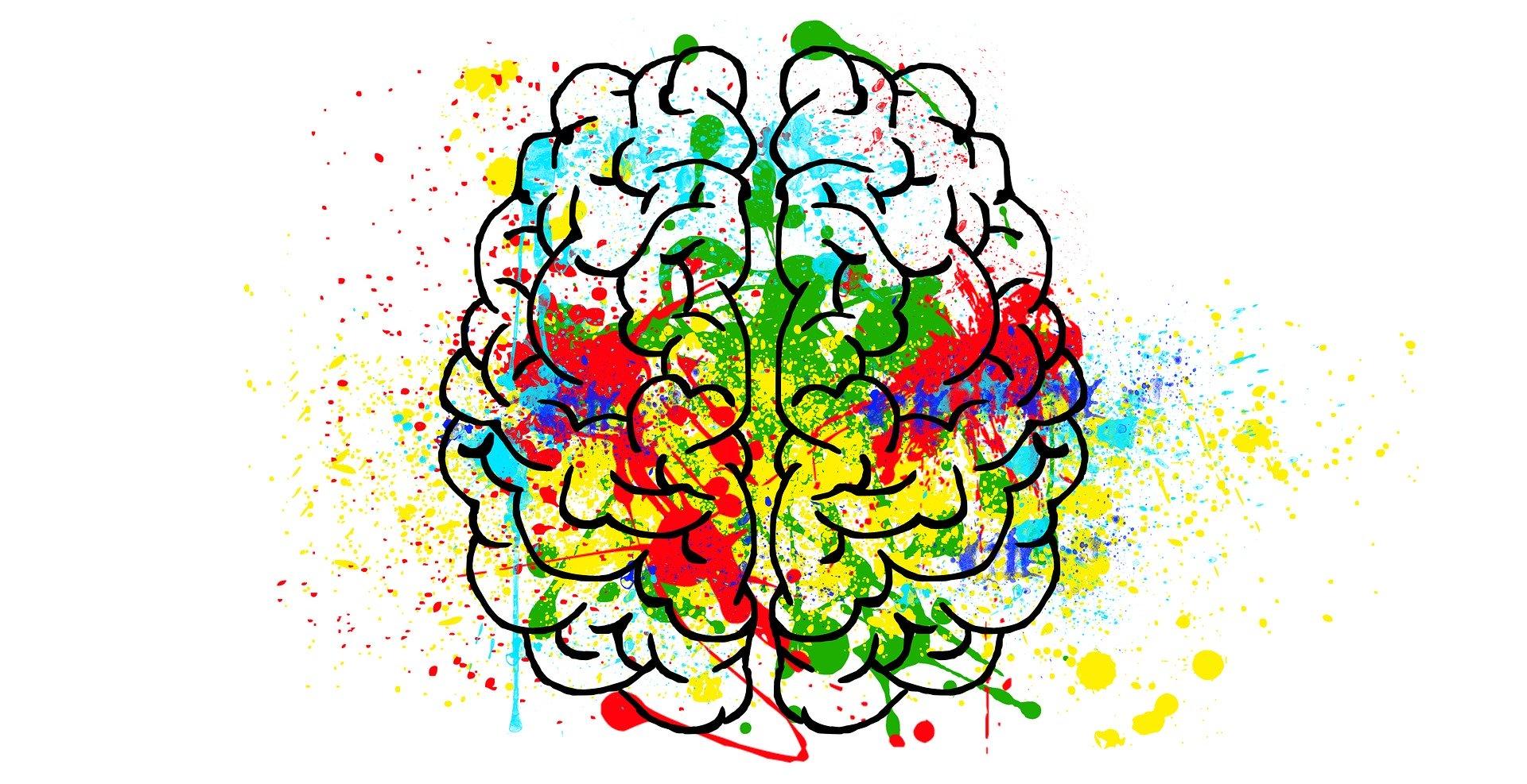La plasticité cérébrale du cerveau dans l'apprentissage ...