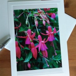 photograph of fuchsias by doris lovadina-lee on blank greeting card